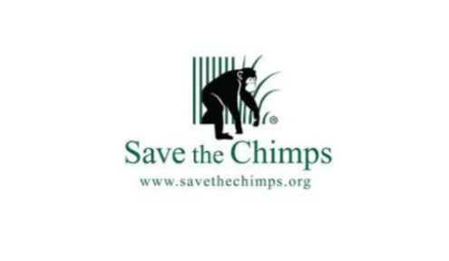A Whole Lot Is Happening At Save The Chimps